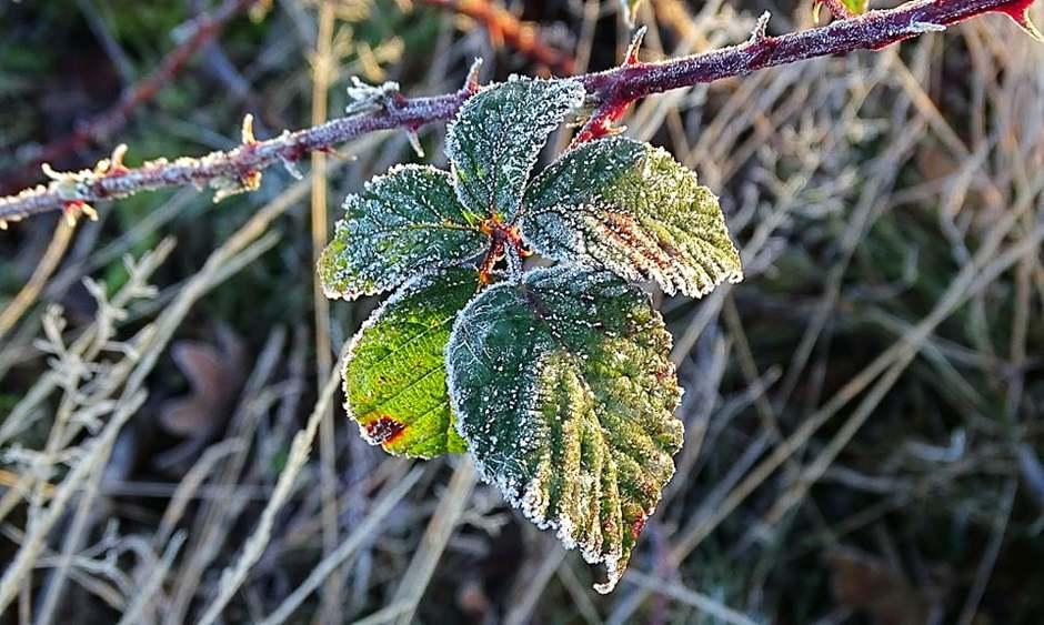 Bevroren blaadjes