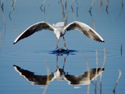Reflection at RSPB Strumpshaw Fen