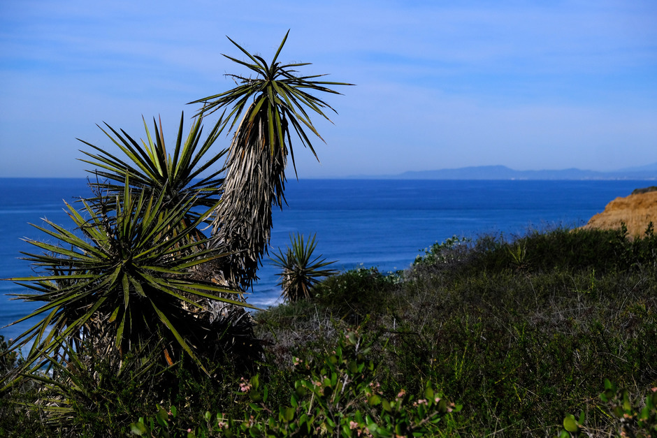Yucca Point
