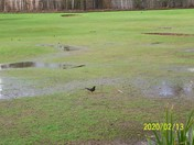 A black bird spotted at Coburg golf course, Sidmouth