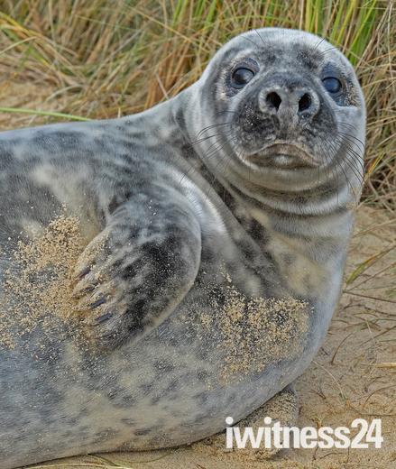 Horsey Gap Seal :)