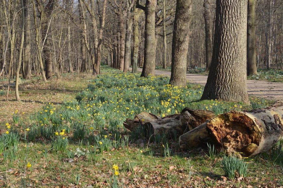 Zonnig in het bos