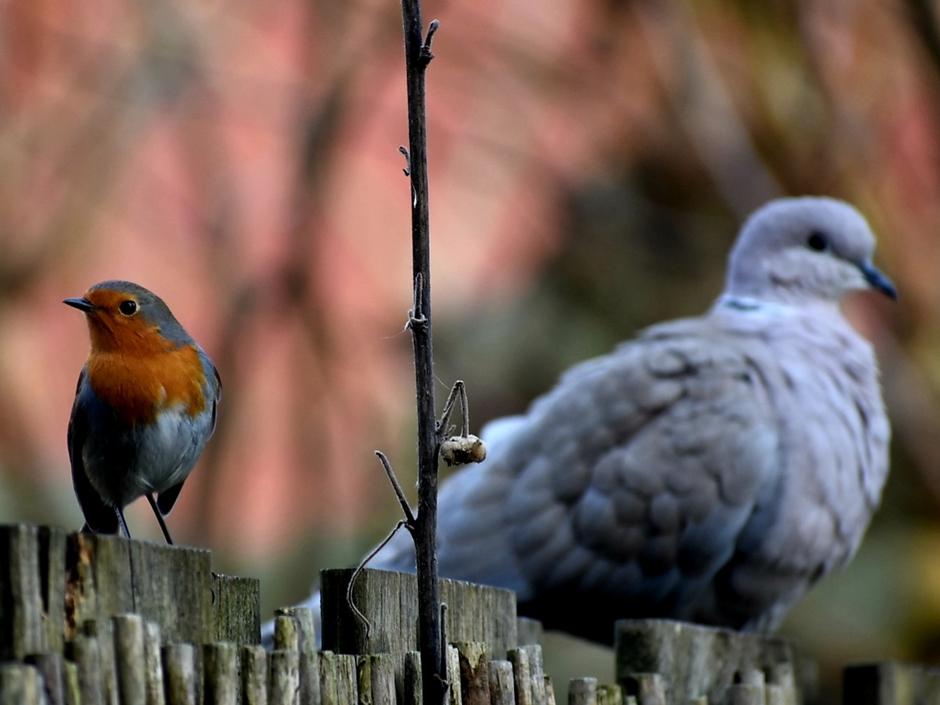 Samen in de zon op het hek.