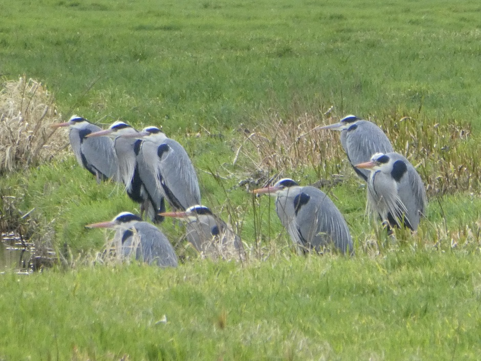 Reigers