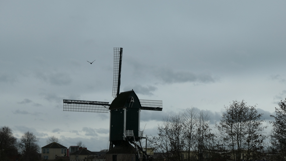 molen in de wind