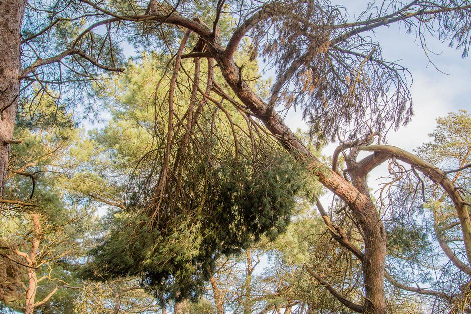 takken die zijn af gekraakt van de boom