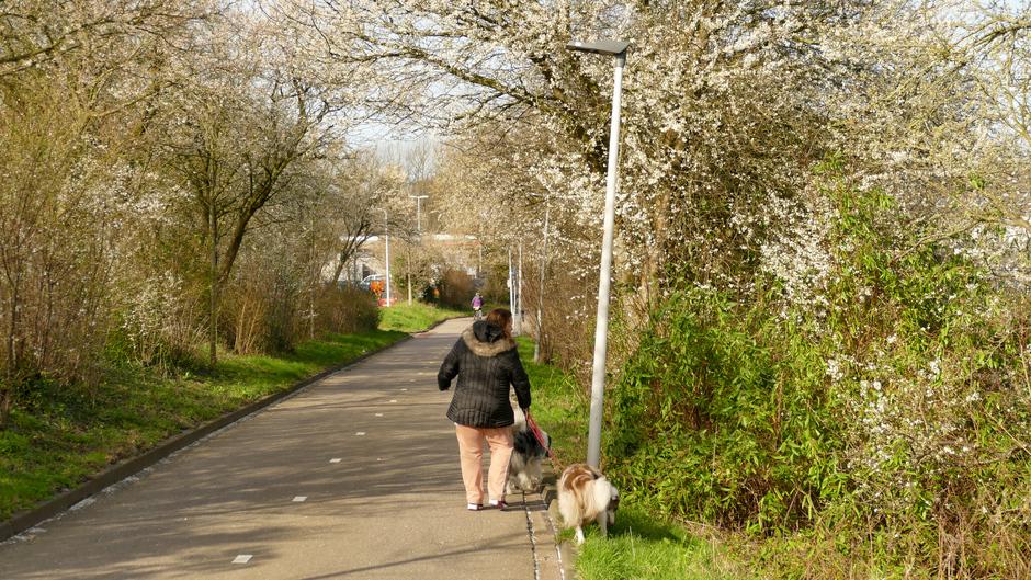 Sleedoorn bloeit in de Stevenshof te Leiden