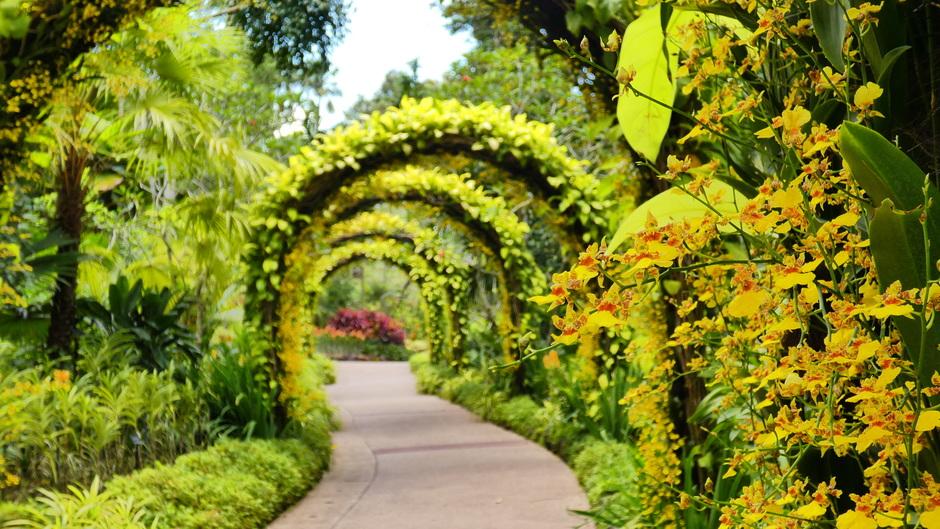 Orchideeën tuin botanische tuin van Singapore