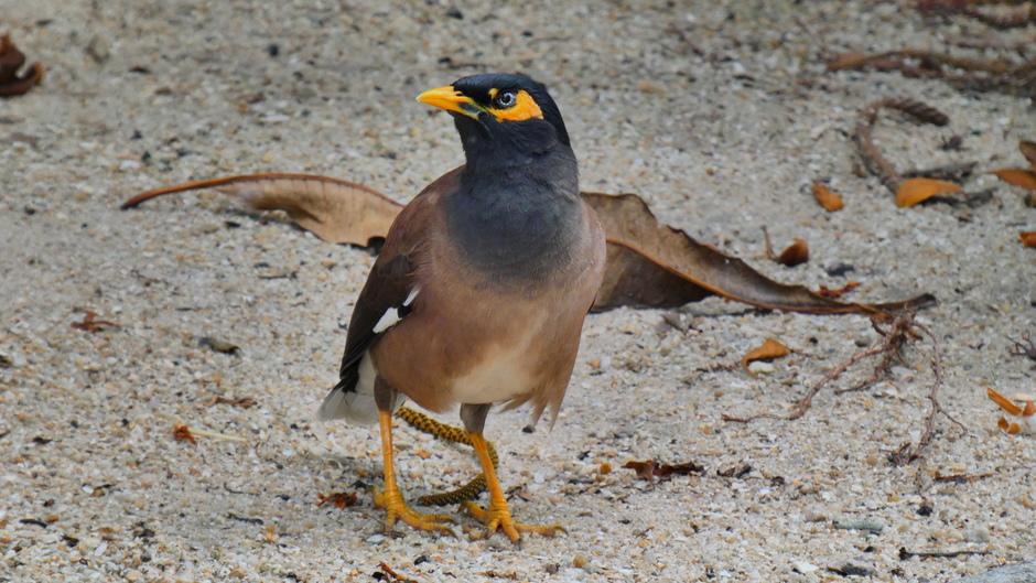 Vogel in Singapore