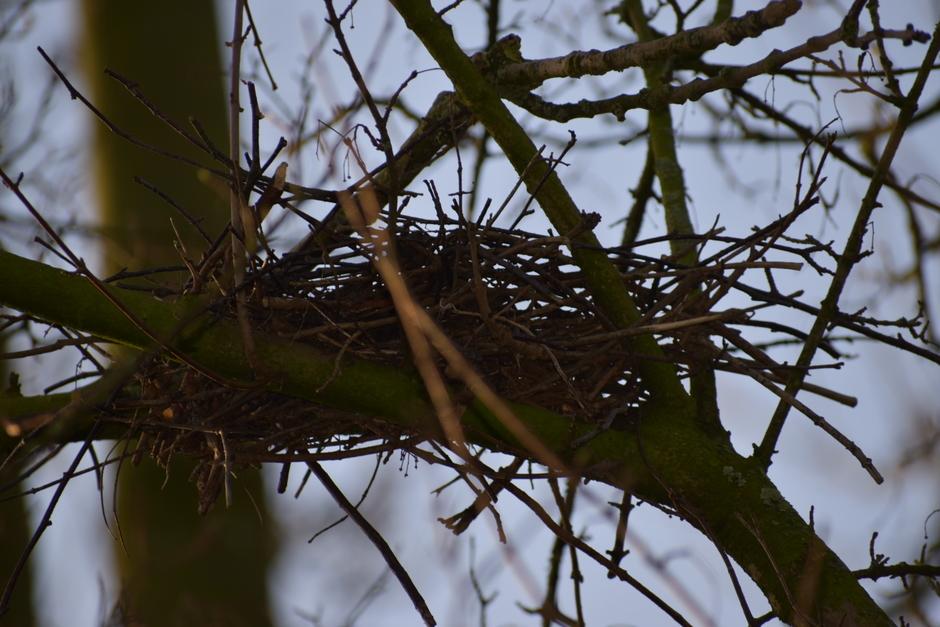 Nestjes in aanbouw.