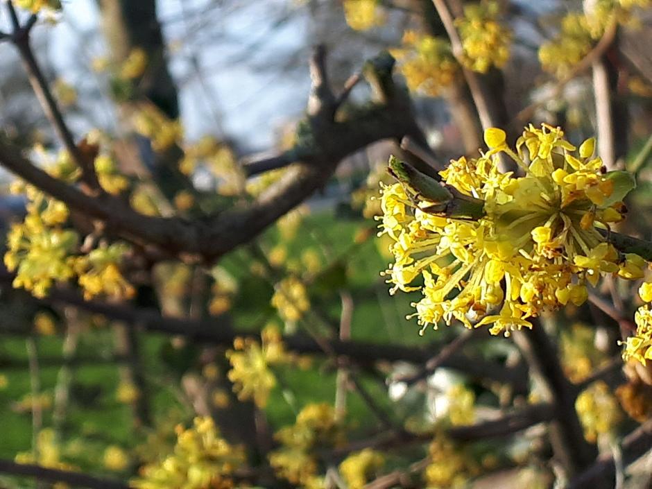 De natuur voelt zich al in de lente.
