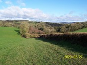 Holyford Woods, Near Seaton