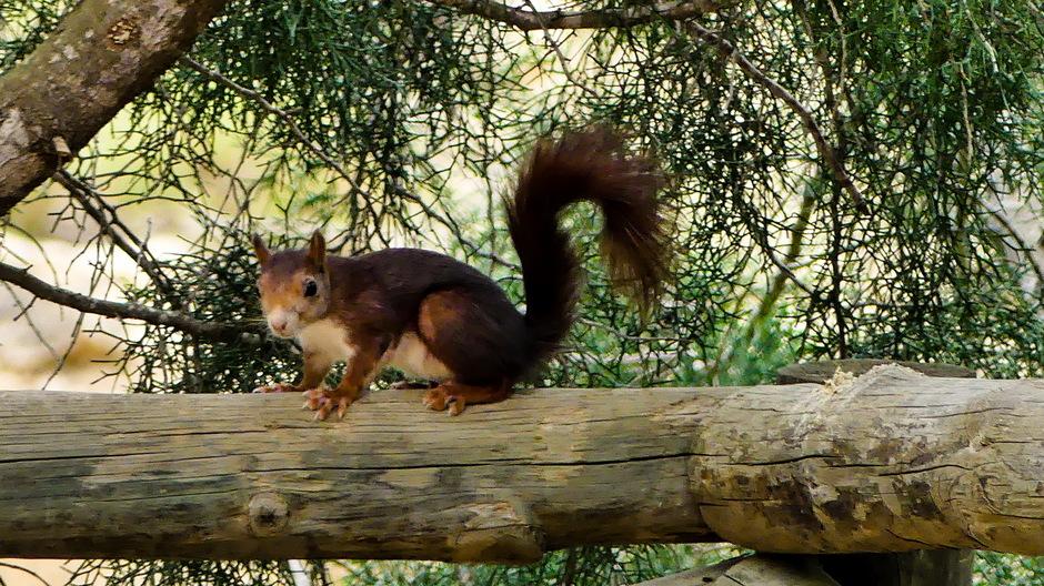 Ontmoeting met eekhoorntje