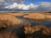 Weston Wetlands