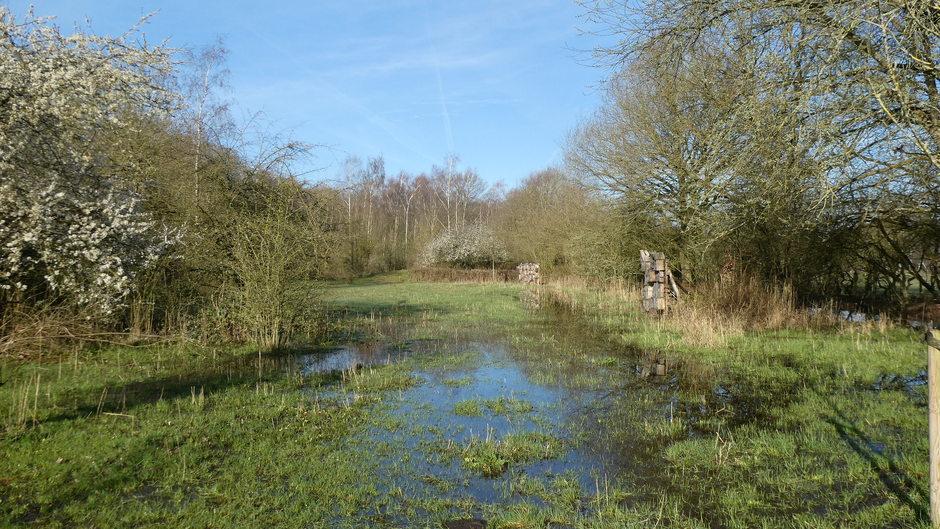 het grondwaterpeil is hoog in het natuurgebied