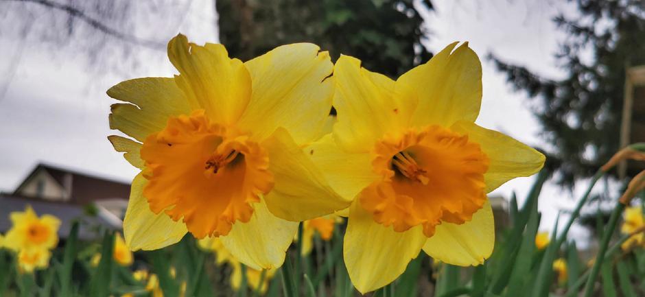 De lente is begonnen. De dag is veelal grijs