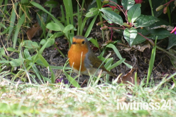 Photo Challenge - Garden Life