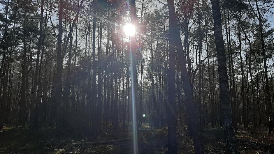 Harderwijkerbos met strak blauwe lucht