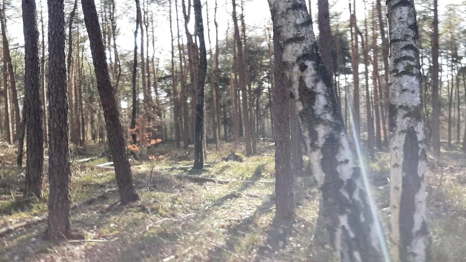 Mooi weer om te fietsen in de bossen.
