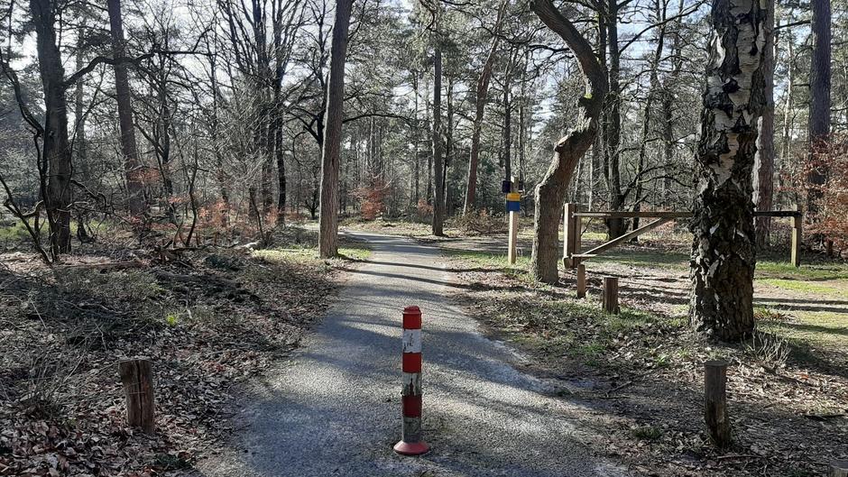 Mooi weer om te fietsen in de bossen