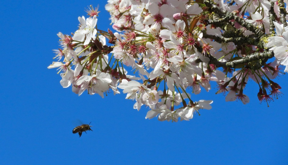 Zon en helder blauwe lucht