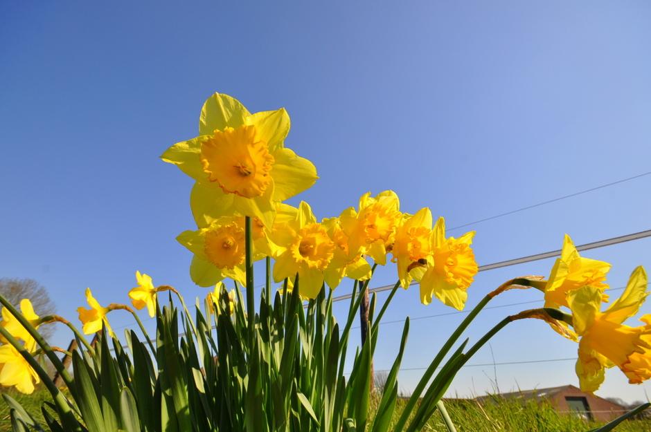zonnig lenteweer