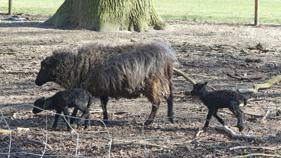 twee zwarte schapen in de familie