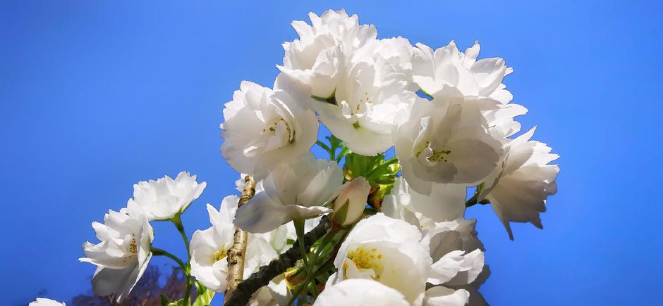 Thhusblijven en genieten van de lente in Doornenburg