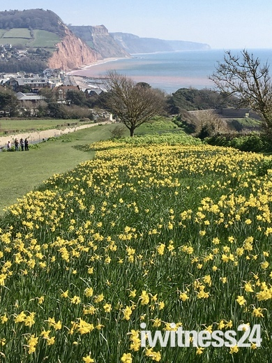 Blooming Beautiful Sidmouth