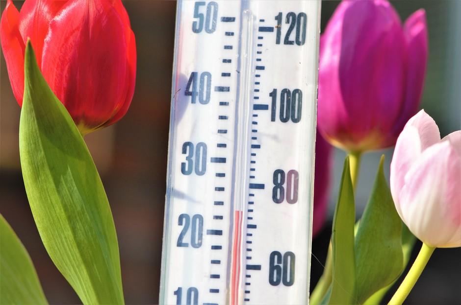 In de zon hier in de achtertuin op het zuiden is het zomers warm