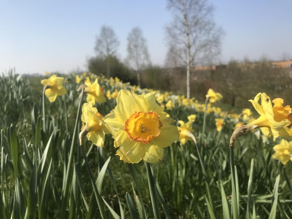 Het is altijd lente in de ogen...
