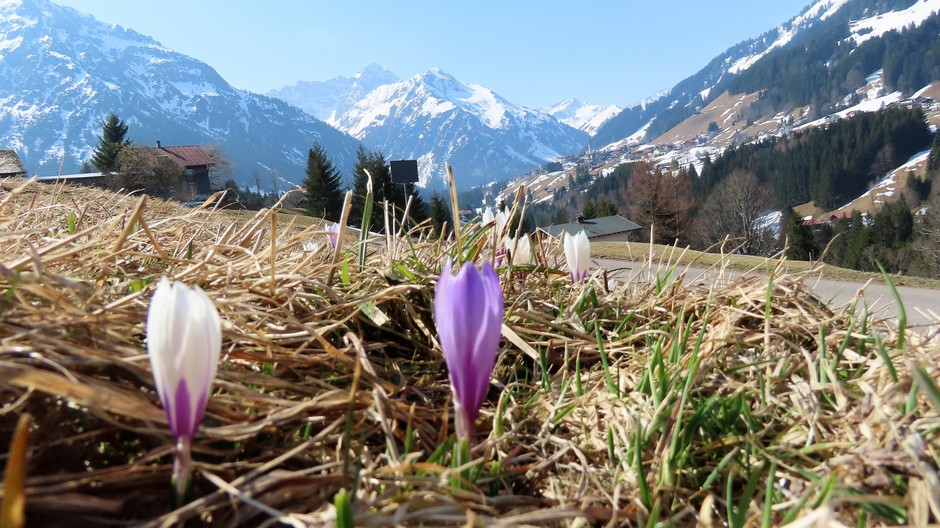 Alpen: morgen winters