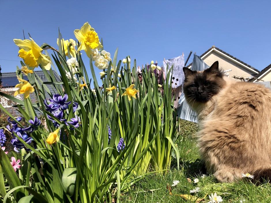 Chillen in de tuin. #BlijfThuis
