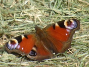 Happy butterfly photo