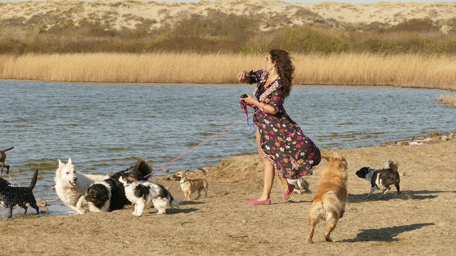 Hondenuitlaatservices, hoeft niet iedereen naar buiten!