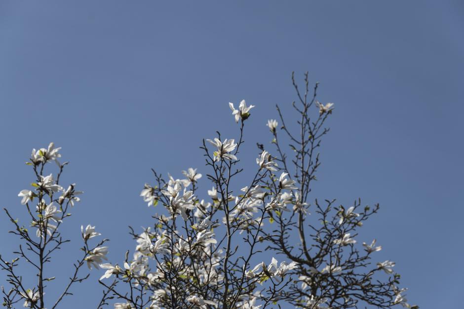 Een bloeiende boom