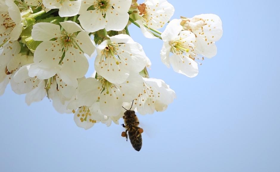 Op deze mooie lente dag word  er af en aan gevlogen