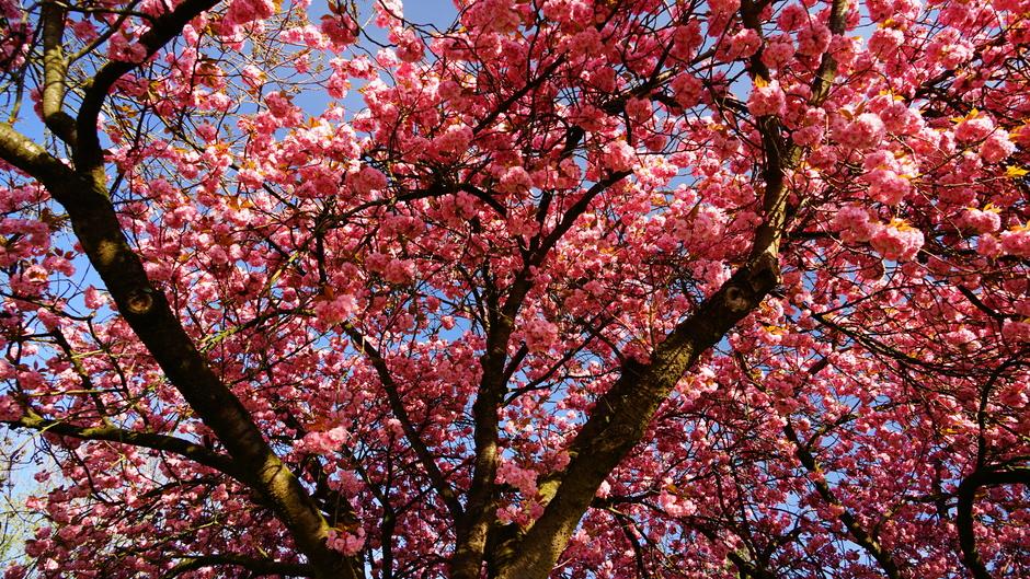 Volop in bloei