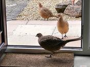 Bird watching during Coronavirus