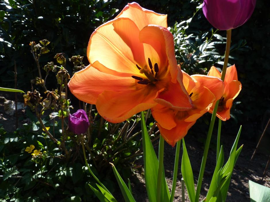 Blijven genieten van de lente.