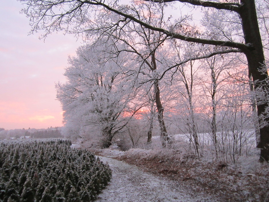 Rijp een feeëriek landschap in Vaassen