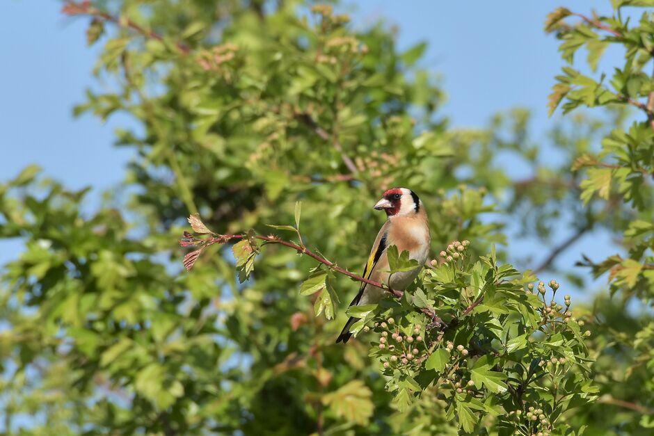Aan de vogeltjes kun je al horen hoe mooi de dag word vandaag. Blauwe lucht en zonovergoten.