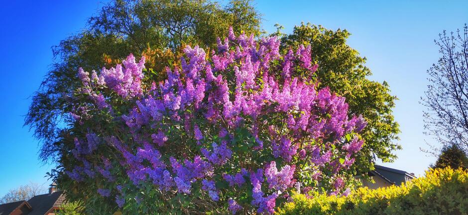 Kleurrijk in de natuur