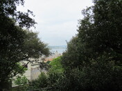 A view across the sea through the trees