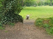 Our dog Ivey flying through the Byes in Sidmouth