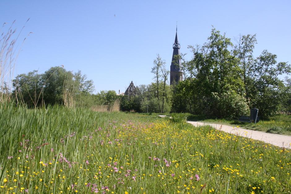 Het bos, de kerk en de veldbloemen