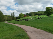 Photos taken on walks during lock down in Sidford,Harombe,Sidmouth.