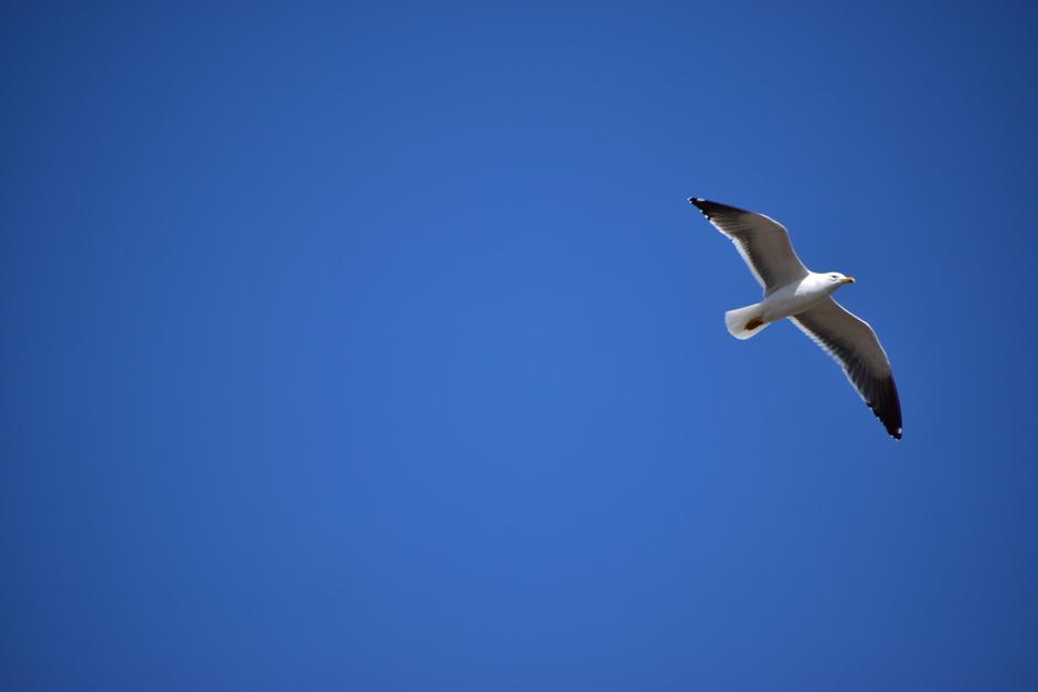 Knalblauwe lucht en meer vrijheid