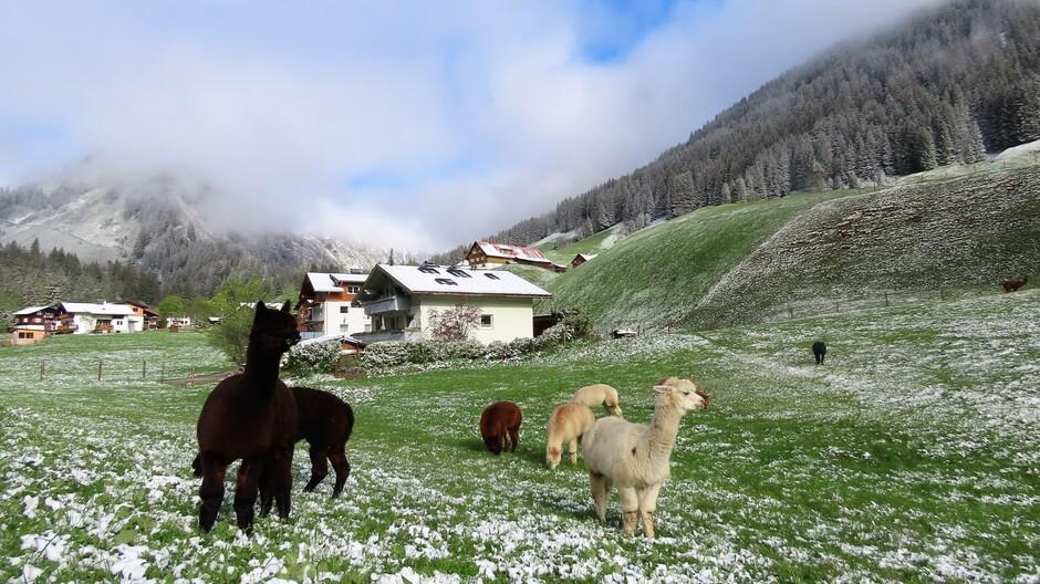 Alpen: Ijsheiligen