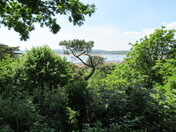 A sea-view through the trees from Beacon Hill, Exmouth
